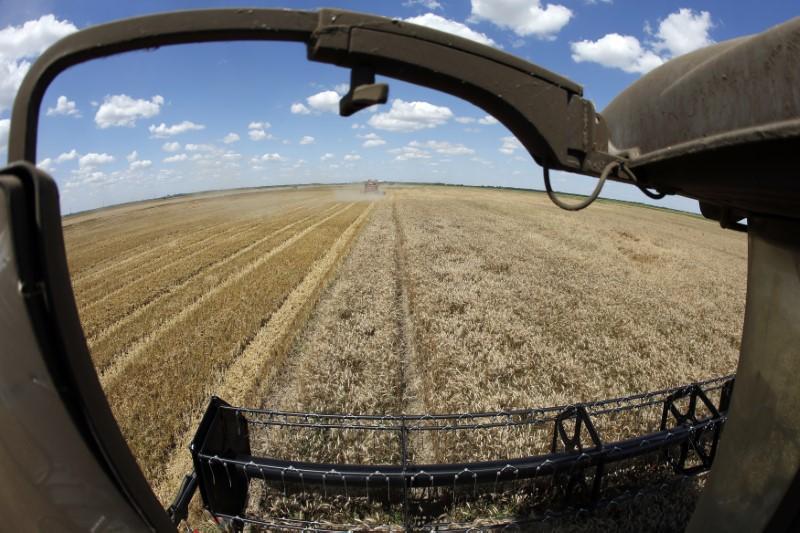 A reaper harvests a field of wheat in Orezu, southeastern Romania, July 2, 2014.   REUTERS/Bogdan Cristel