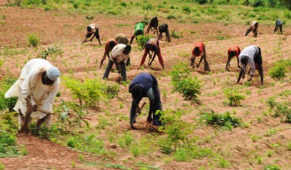 Farmers-in-Nigeria-tvcnews