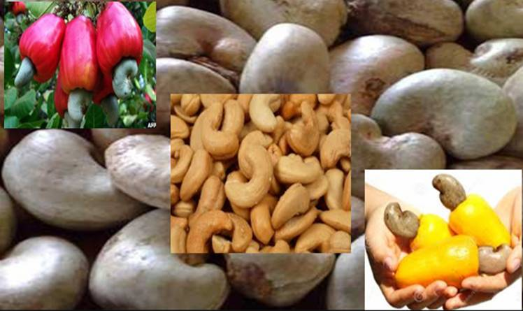 Cashew exports soar amidst 85% increase in prices