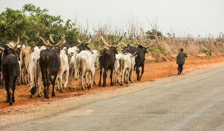 Nigeria-Fulani-TVCNews