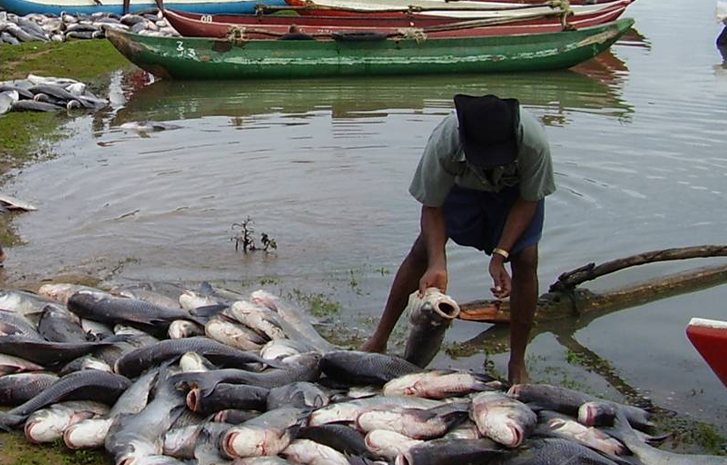 Fishing-TVCNews