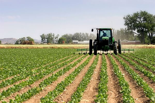 Experts urge politicians to invest in farming