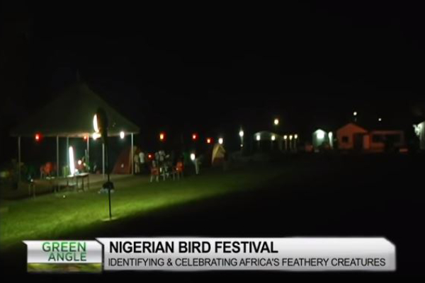 Nigerian Bird Festival