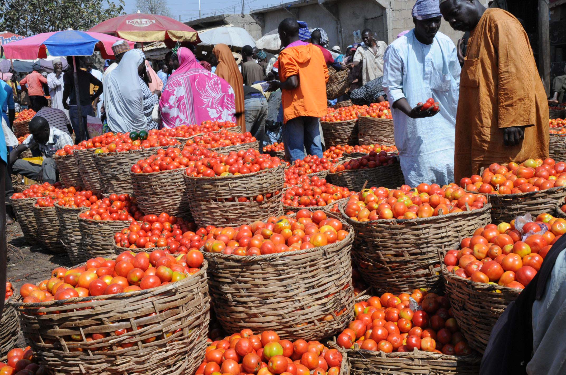 PIC.23. TOMATOES DISPLAYED AT THE ABUBAKAR GUMI CENTRAL MARKET IN KADUNA MONDAY (23/12/13)