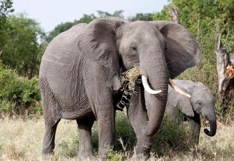 Tanzania seizes ivory tusks equivalent to 117 elephants killed