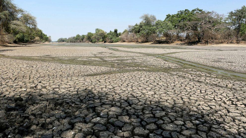 Drought kills more than 200 elephants in Zimbabwe