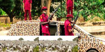 Amotekun arrests 400 cows in Ondo