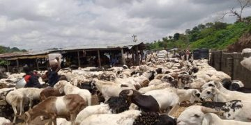 Rams sold in unapproved markets will be confiscated-FCTA