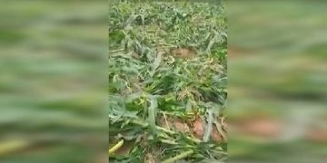 current news, army tells nigerians to disregard doctored video of farmlands being destroyed