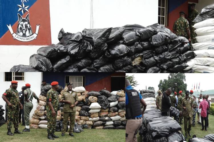 UPDATED: Two fake policemen arrested in Ondo for trafficking cannabis