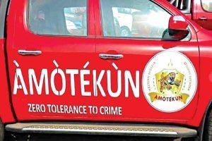 Latest Breaking News about anti Open Grazing Law: Amotekun arrest 3 Herdsmen, 58 Cows in Ondo