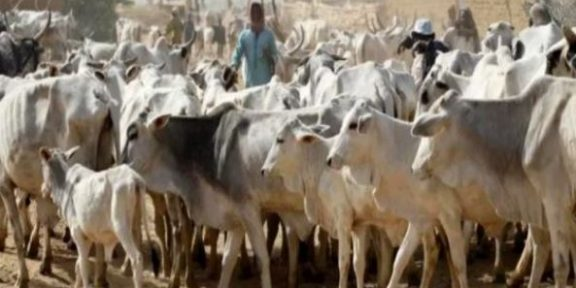 Open grazing ban: 11 Southern States fail to meet deadline, 6 comply