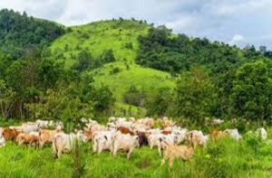 Anti-open grazing law: Experts advocate need for enforcement, urge herders to embrace ranching