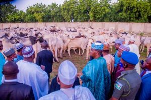 Latest Breaking news about Cattle Rustling :n Zamfara, Security Agents recover 185 stolen Cattle